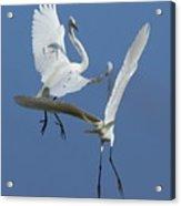 Aerial Ballet Acrylic Print