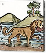 Aesop: Dog & Shadow, 1484 Acrylic Print