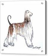 Afghan Hound Acrylic Print