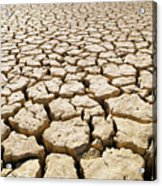 Africa Cracked Mud Acrylic Print