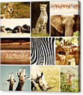 African Animals Safari Collage  Acrylic Print by Anna Om