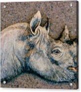 African Black Rhino Acrylic Print