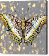 African Butterfly Acrylic Print