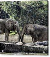 African Elephants_hdr Acrylic Print