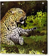 African Leopard Acrylic Print
