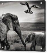 African Playground Acrylic Print