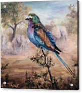 African Roller Acrylic Print by Brenda Thour
