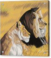 African Royalty Acrylic Print