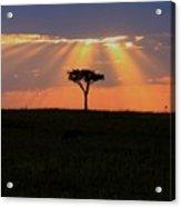African Sunset Rays Acrylic Print