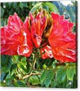 African Tulip Flower #2 Acrylic Print