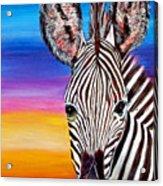 African Zebra Aura Acrylic Print