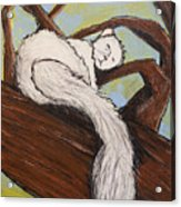After The White Squirrel Festival Acrylic Print