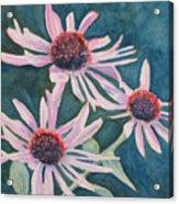 Afterglow II Acrylic Print