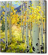 Afternoon Aspen Grove Acrylic Print