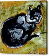 Afternoon Cat Acrylic Print