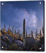 Afternoon Desert Scene Acrylic Print