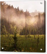 Afternoon Mist Acrylic Print