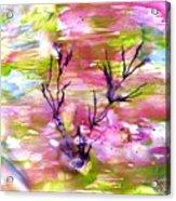 Afternoon Pond Acrylic Print