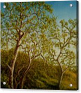Afternoon Sycamores Acrylic Print