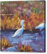 Afternoon Waders Acrylic Print