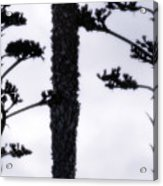 Agave And Palm Acrylic Print