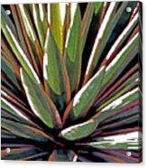 Agave Impressions 1 Acrylic Print