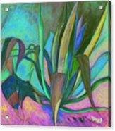 Agaves Sous Le Soleil Acrylic Print