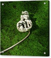 Aguished Leaf Acrylic Print