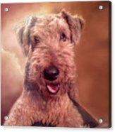 Airedale Acrylic Print