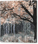 Airy Autumn In Woods Acrylic Print