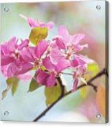 Airy Spring 1 Acrylic Print