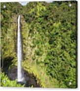 Akaka Falls, Hawaii Acrylic Print