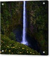 Akaka Falls Acrylic Print