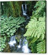 Akaka Falls Stream Acrylic Print