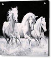Al Galoppo  Nella Notte Acrylic Print