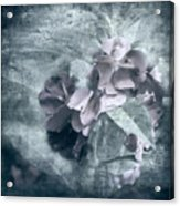 Alabaster Petals Acrylic Print