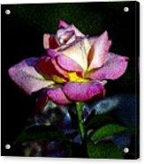 Alan Rose Acrylic Print