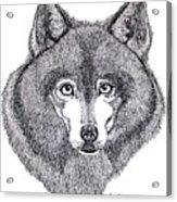 Alaskan Husky Acrylic Print
