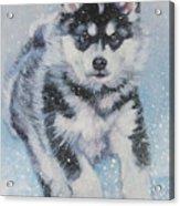 alaskan Malamute pup in snow Acrylic Print