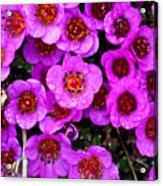 Alaskan Wild Flowers Acrylic Print