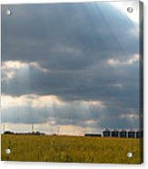 Alberta Wheat Field Acrylic Print
