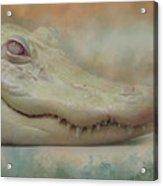 Albino Alligator Acrylic Print