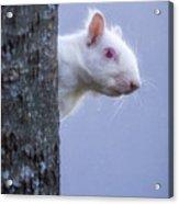 Albino Squirrel Acrylic Print