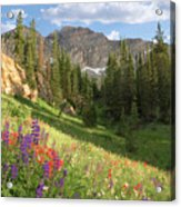 Albion Basin Wasatch Mountains Utah Acrylic Print by Utah Images