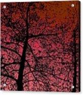 Alder Trees Against The Winter Sunrise Acrylic Print