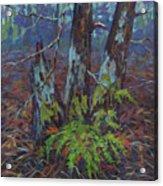 Alders With Ferns Acrylic Print