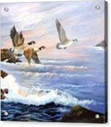 Aleutian Geese With Lighthouse Acrylic Print