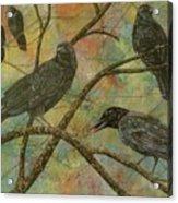 Alex's Crows Acrylic Print
