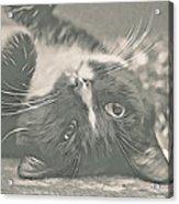 Alfie Acrylic Print