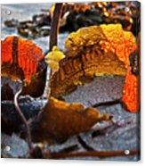 Algae At Low Tide Acrylic Print by Heiko Koehrer-Wagner